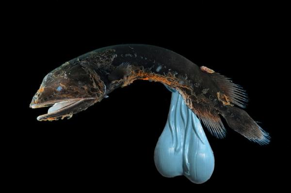 Dick Fish