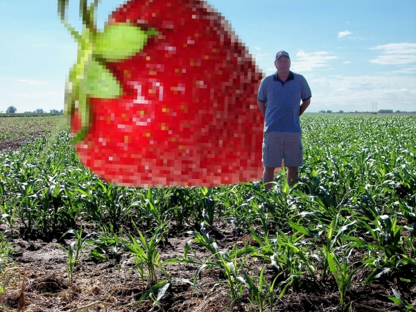 Giant Strawberry