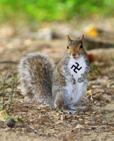 Nazi Squirrel